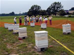 The Temporary Apiary