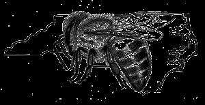 NCSBA_logo.black-on-transparent