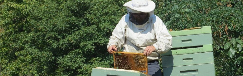 Apiary Inspection Program