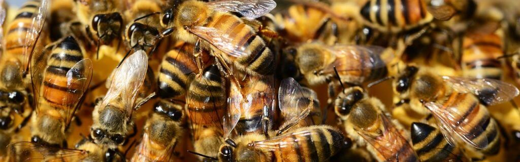 Honey Bee Health Workshop for Veterinarians in Monroe,  Laurinburg