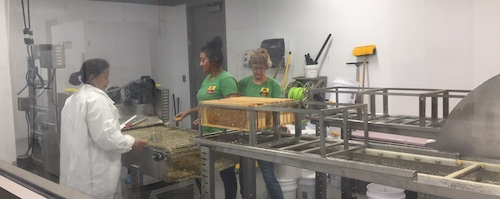 Three women extracting honey in clean looking extraction romo at University of Minnesota Spivek Lab
